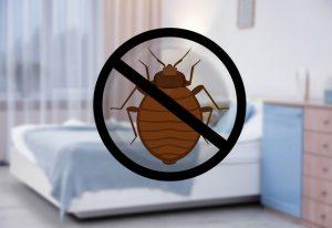 bed bug sniffer dog Denver